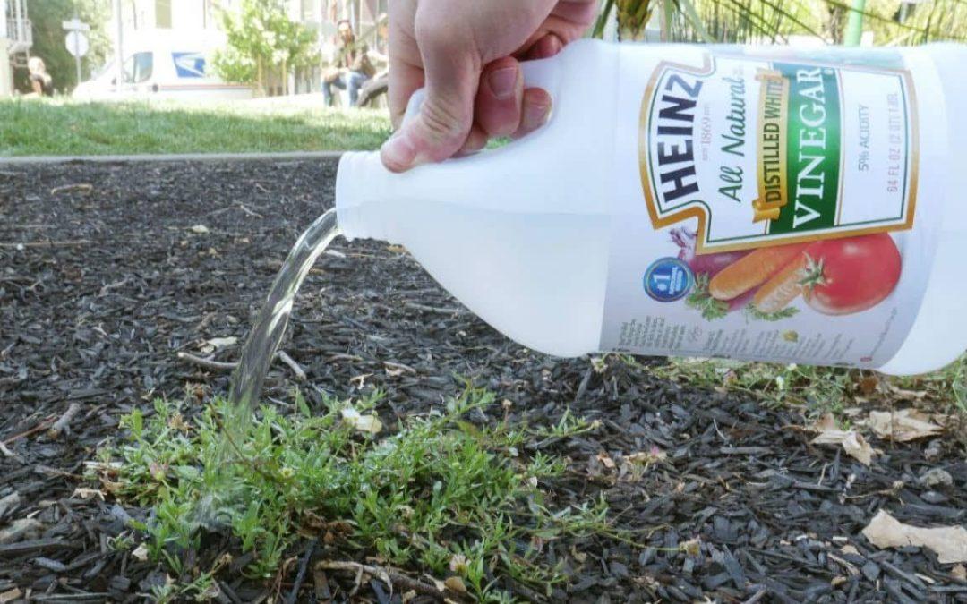 le meilleur désherbant naturel pour votre jardin - Jardin de Grand ...