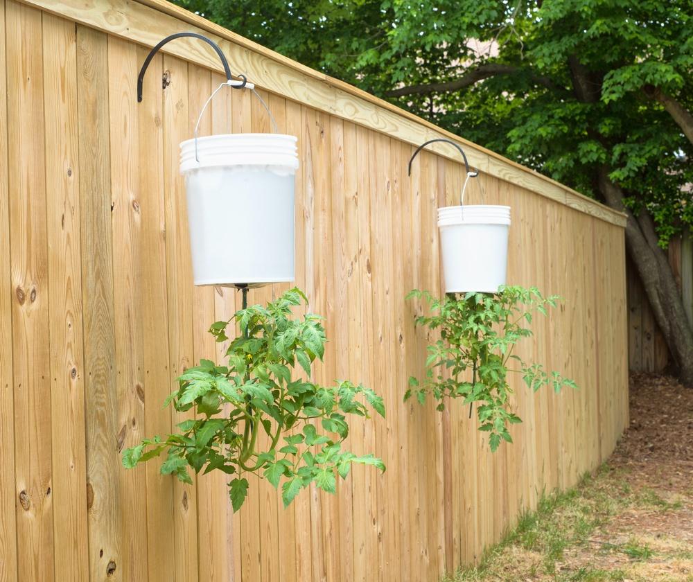 Faire Pousser Tomates En Pot comment faire pousser des plants de tomates à l'envers