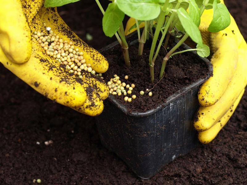 Comment faire des engrais agricoles à la maison - Jardin de Grand Meres