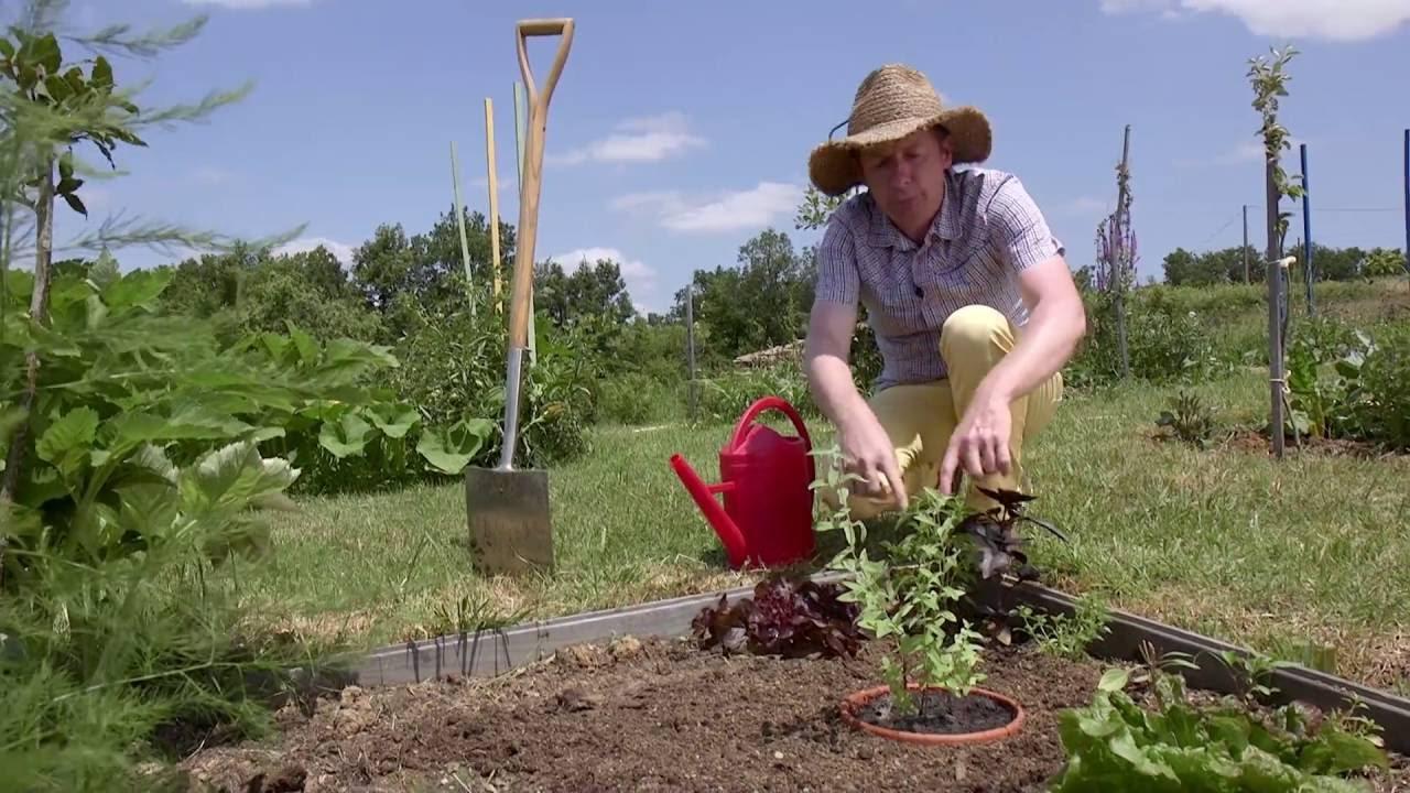 Planter Menthe En Pot Étapes de la plantation de menthe - jardin de grand meres