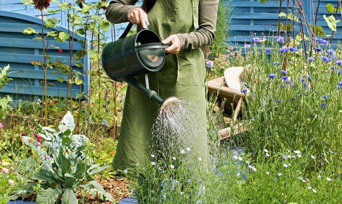 Pouvez-vous faire le jardin sans eau ? Notre véracité pour enfin connaître la vérité - Page 2 ...